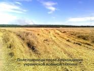 Пшеничное поле под Александровском