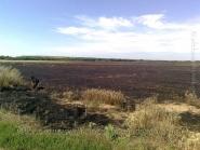 Пшеничное поле под Александровском после боя